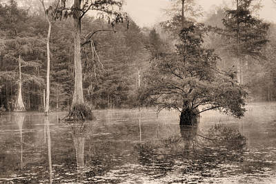 Photograph - Gator Country by JC Findley