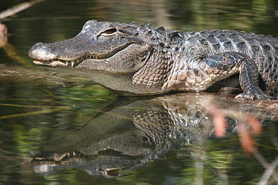 Farmhouse - Smiling Alligator Reflection by Ian Mcadie