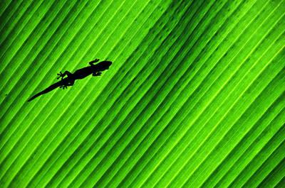 Gecko Silhouette Art Print by Brian Bonham