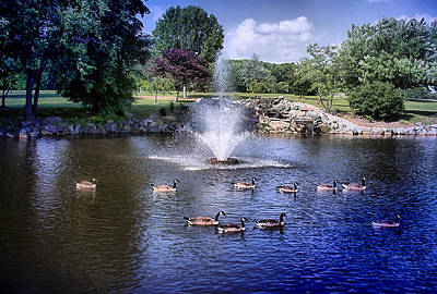 Photograph - Geese A Swimming by Trudy Wilkerson