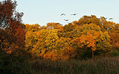 Photograph - Geese Flight by Edward Peterson