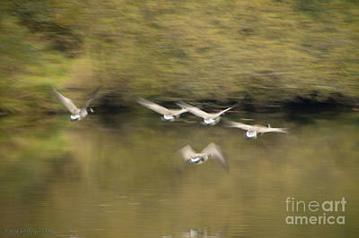 Photograph - Geese In Flight by Larry Keahey