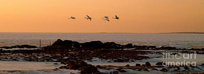Photograph - Geese In Sunset by Michael Canning