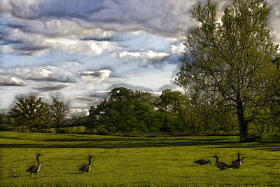Geese On Painted Green 2 Art Print by Bill Tiepelman