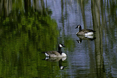 Goose Photograph - Geese On The Pond by LeeAnn McLaneGoetz McLaneGoetzStudioLLCcom