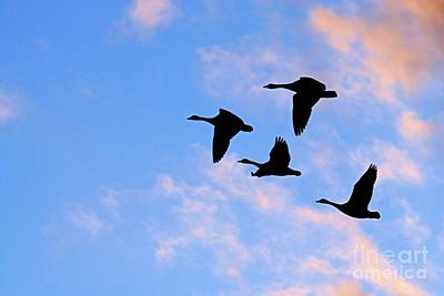 Photograph - Geese Silhouetted At Sunset - 2 by Larry Ricker