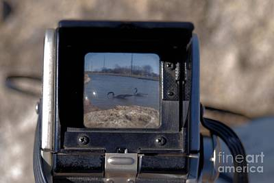 Photograph - Geese Thru A Duaflex by Mark McReynolds
