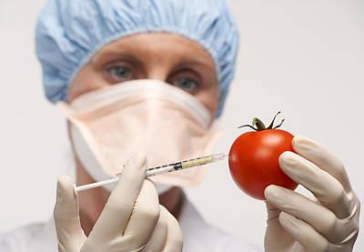 Genetically Engineered Tomato Art Print by Mark Sykes