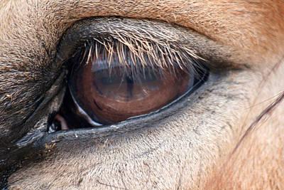 Gentle Eye Art Print by Wendi Matson
