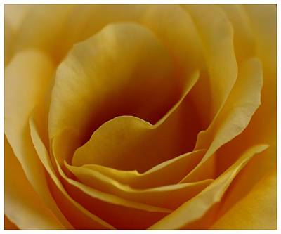 Photograph - Gentle Folds by Frank Wickham