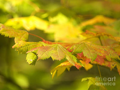 Photograph - Gentle Glow by Sharon Talson