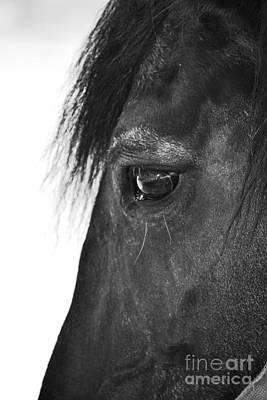 Photograph - Gentle Soul by Traci Cottingham