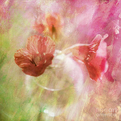 Abstract Digital Photograph - Gentleness by Linde Townsend