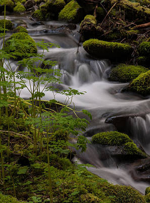 Olympic National Park Photograph - Gently Falling by Mike Reid