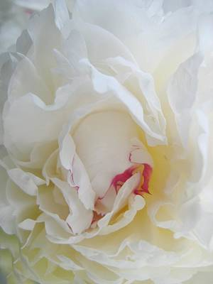 Gently Unfolding Art Print by Shirley Sirois