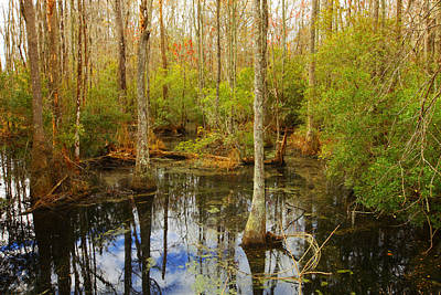 Photograph - Georgia Swamp by Sheila Kay McIntyre