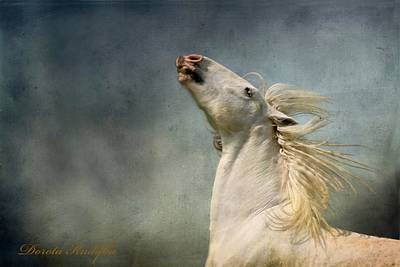 Draft Horses Photograph - Georgiano Cavalli by Dorota Kudyba