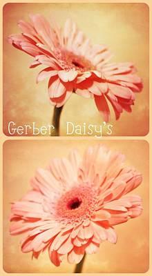 Gerber Daisy Photograph - Gerber Daisy's Two by Cathie Tyler
