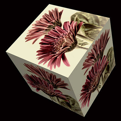 Photograph - Gerbera Cube On Black by Steve Purnell