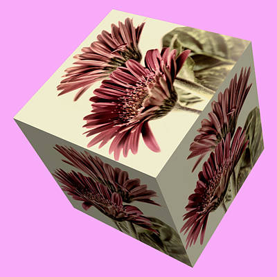 Photograph - Gerbera Cube On Pink by Steve Purnell