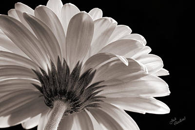 Photograph - Gerbera Daisy In Black And White by Judi Quelland