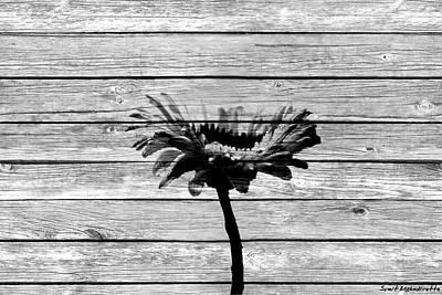 Photograph - Gerbera Flower by Sumit Mehndiratta