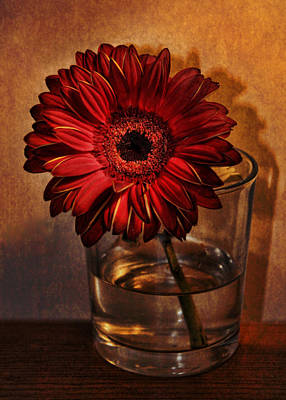 Photograph - Gerbera by Julie Williams