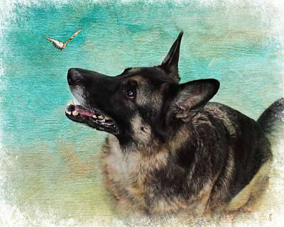 Herding Dog Photograph - German Shepherd And Butterfly by Jai Johnson