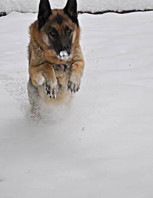 German Shepherd In The Snow 2 Original by Tanya  Searcy