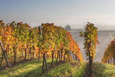 Y120831 Photograph - Germany, Bavaria, Theilheimer Mainleite Near Waigolshausen, View Of Vineyard by Westend61
