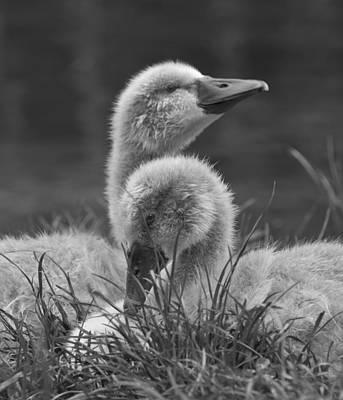Photograph - Get Ahead by Steven Poulton