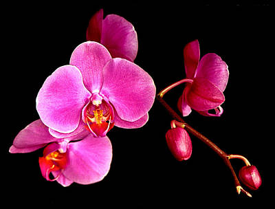 Photograph - Get Well Orchids by Jean Noren