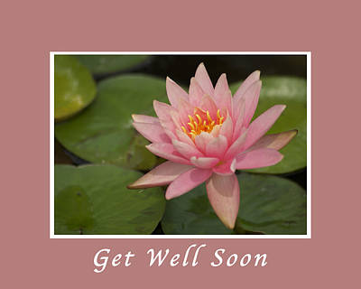 Lotus Blossoms Photograph - Get Well Pink Lotus by Michael Peychich