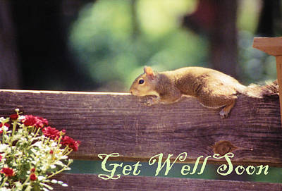 Photograph - Get Well Soon by Jan Amiss Photography