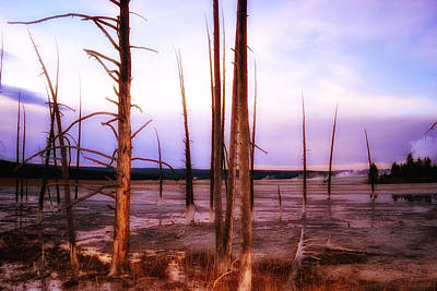 Photograph - Geyser Basin Trees by Kelly Reber