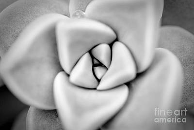 Ghost Petals Art Print by Pixel Perfect by Michael Moore