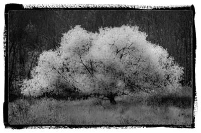 Ghost Tree Art Print by Debra and Dave Vanderlaan