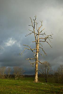 Ghost Tree Print by Douglas Barnett