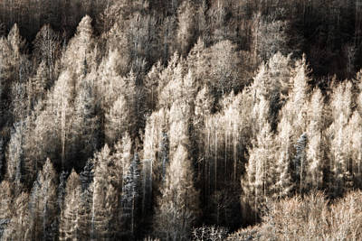 Photograph - Ghostly Forest by Justin Albrecht