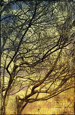 Ghosts Of Crape Myrtles Art Print by Judi Bagwell
