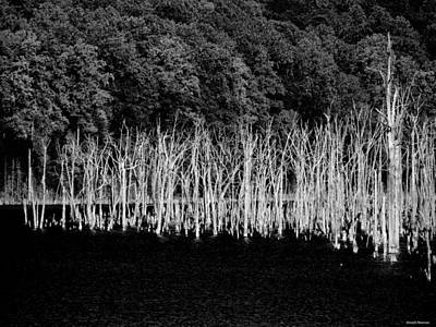 Black And White Photograph - Ghostwood by Joseph Noonan