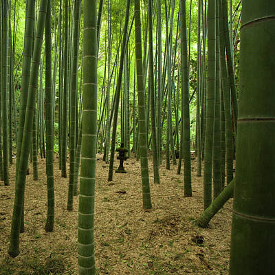 Giant Bamboo Forest With Stone Lantern, Japan Print by Ippei Naoi