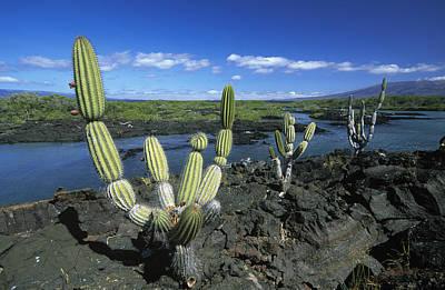 Giant Candelabra Cactus Jasminocereus Art Print by Winfried Wisniewski
