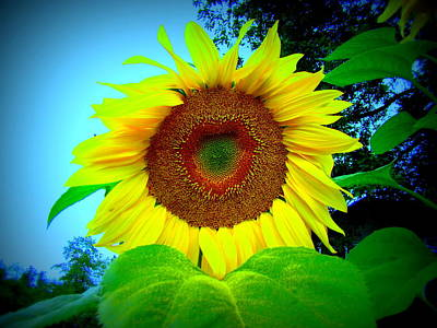 Photograph - Giant Kissing Sunflower by Lisa Rose Musselwhite