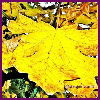Apple Wall Art - Photograph - Giant Maple Leaf by Anna Porter