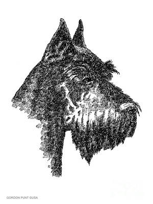 Drawing - Giant-schnauzer-portrait by Gordon Punt