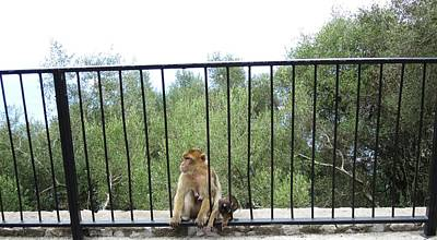 Photograph - Gibraltar Apes Monkeys Baby Uk Territory by John Shiron