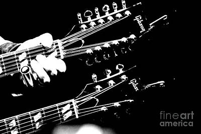 Photograph - Gibson by Traci Cottingham