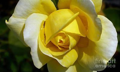 Gina Lollobrigida Rose Art Print