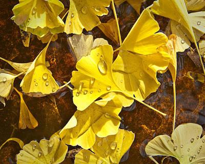Gingko Wall Art - Photograph - Gingko Dew by James Rowland